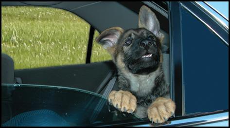 DOG LEFT IN CAR